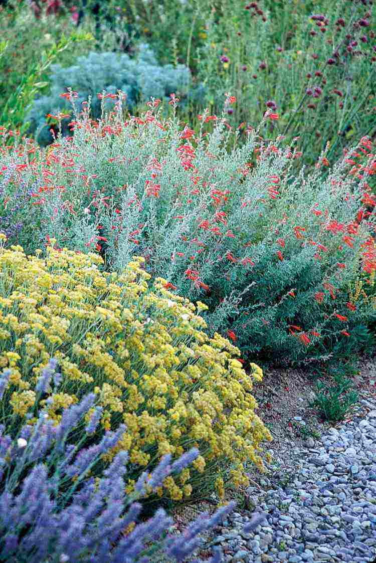 rocas plantas sobre arena flores