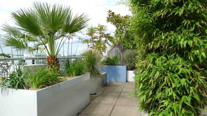terrazas con jardin ideas jardineras palmeras