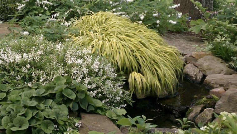 vegetacion jardin opciones hierba montana japonesa ideas