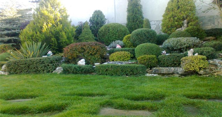 alpineum jardín arbustos redondos