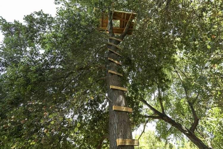 arbol alto cabaña madera deco