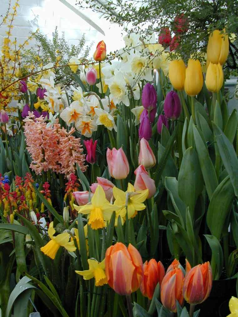beautiful flowers colors spring