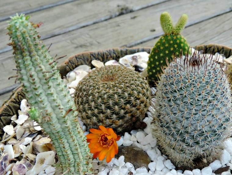 Jardin de cactus cuarenta y nueve ideas de c mo elaborar - Cactus en macetas pequenas ...