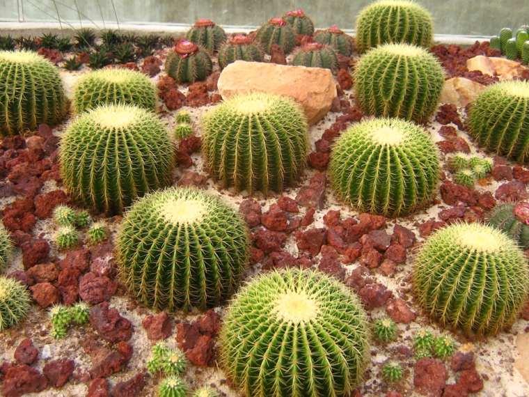 jardín bolas cactus piedras rojizas