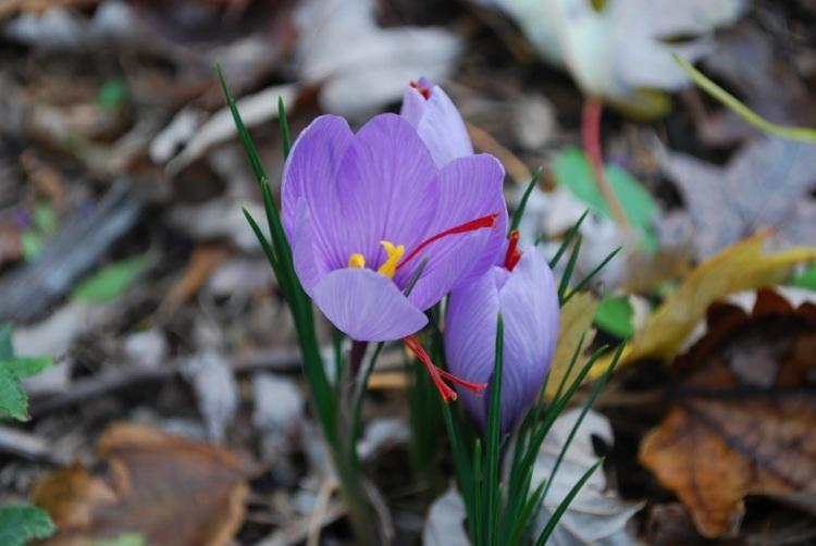 bonita fotografía flor campo