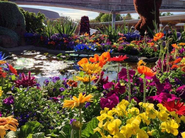 bonita selección flores jardín