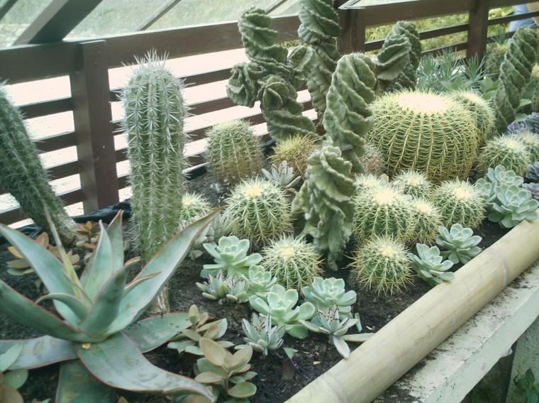 bonita decoración jardinera cactus