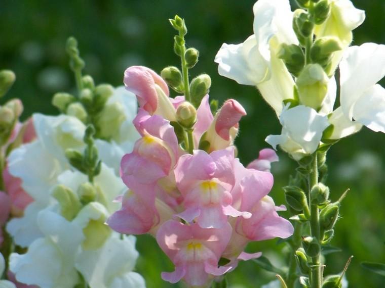 pretty flowers garden spring