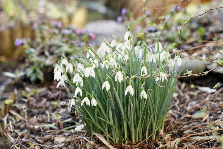 pretty flowers grow march