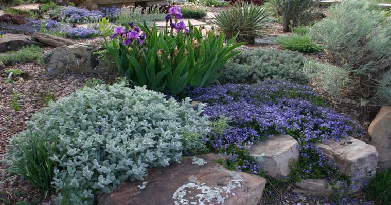 bonitas plantas decoración rocalla