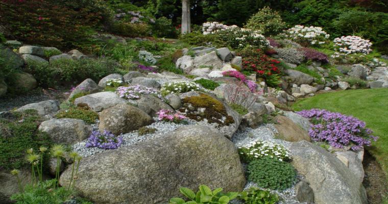 bonito diseño alpineum flores
