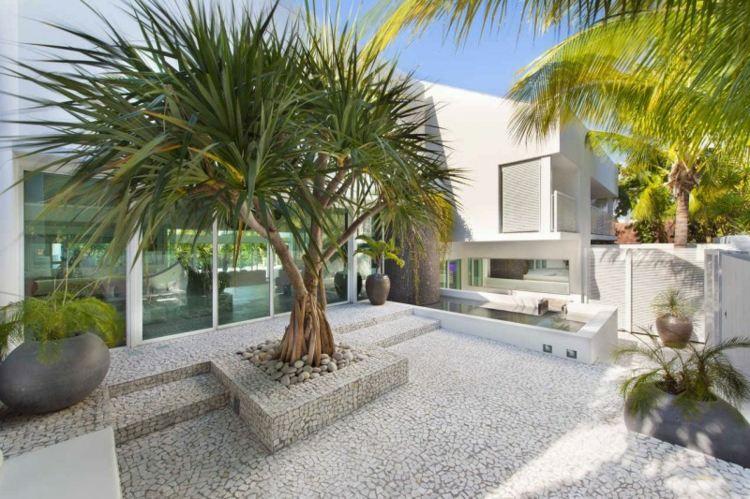 bonito diseño patio minimalista palmera