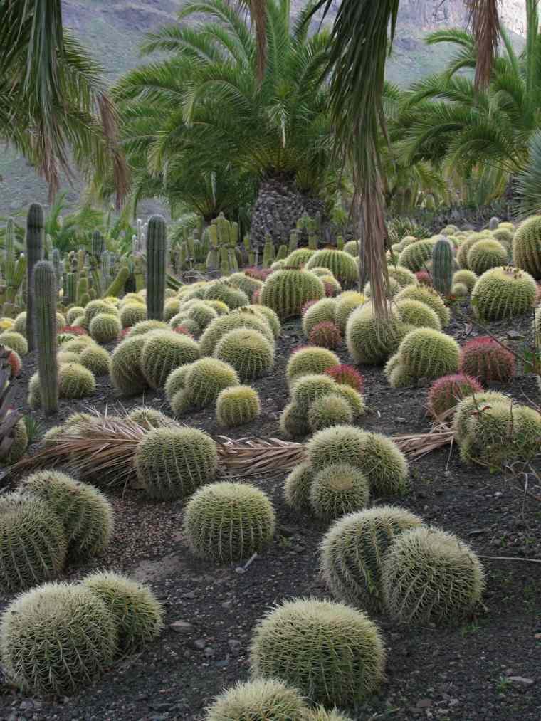 bonito jardin bolas cactus palmeras