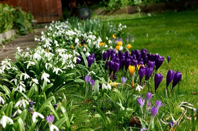 nice garden snowdrops tulips