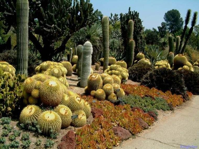 bonito jardin de cactus bolas