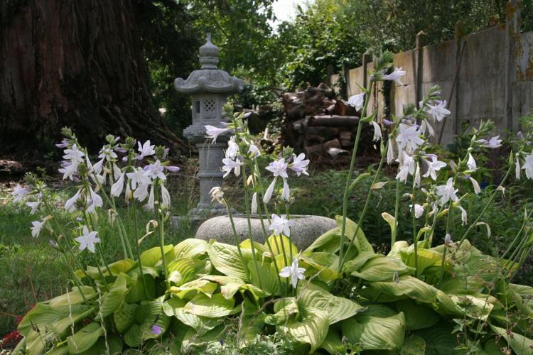 bonito jardin estilo japonés