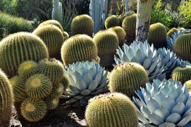bonitos cactus flores color celeste