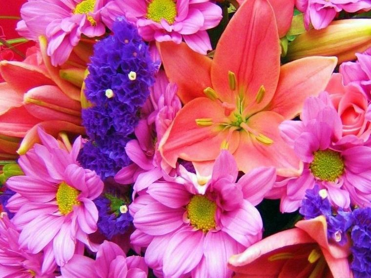 nice selection of spring flowers