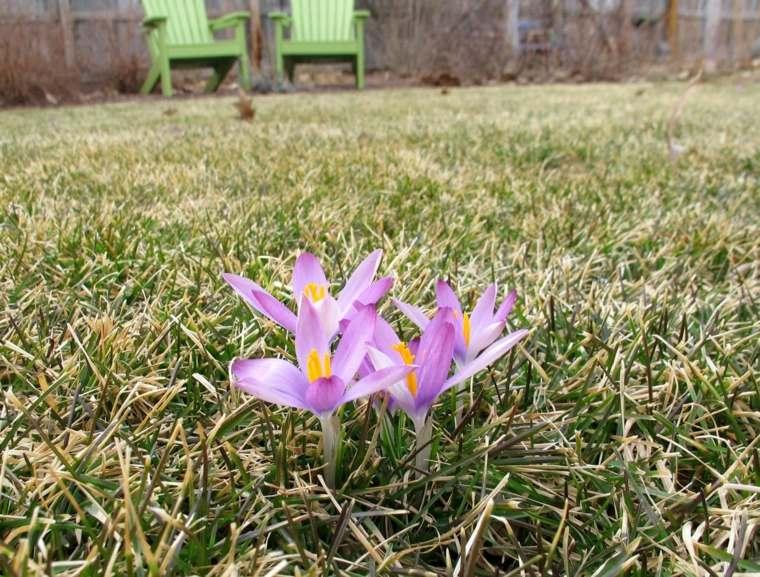 lawn garden flowers crocus deco