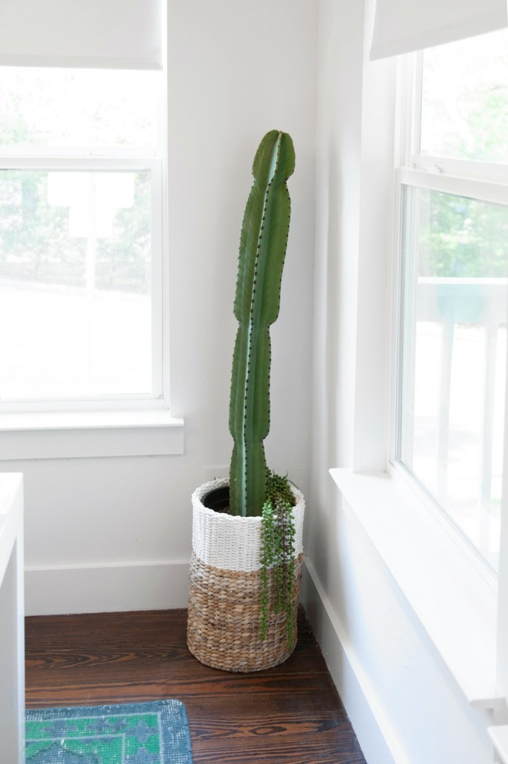 cactus canastas solos estantes frecuencias fuentes