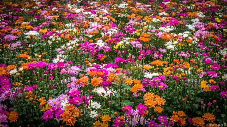 field flowers colors spring beautiful