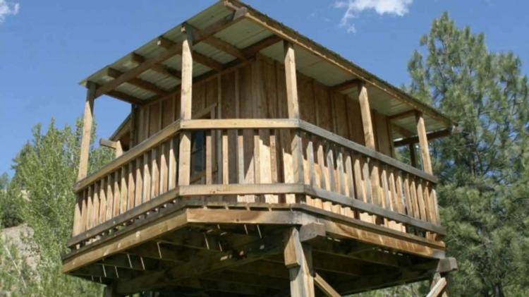 casa arbol diseño madera dco