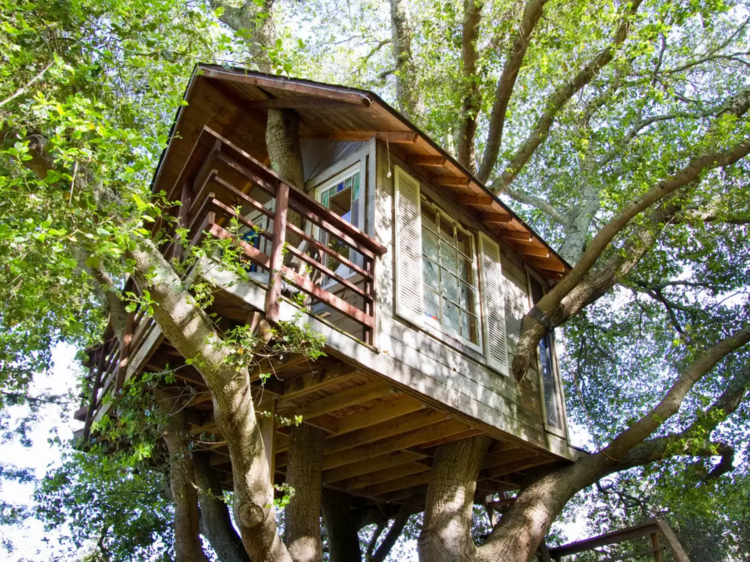 casa cabañá moderna arbol