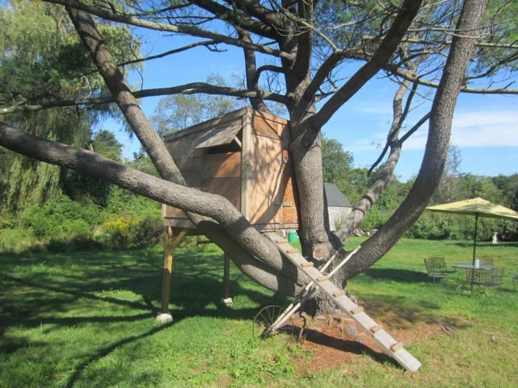 casita alta árbol campo