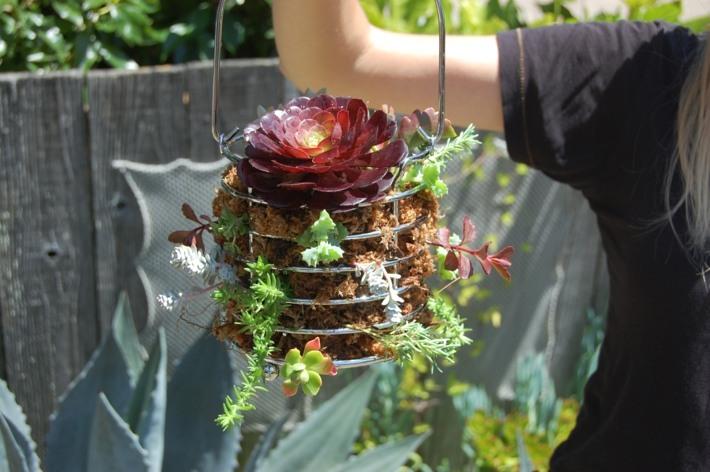 colgantes plantas suculentas fuentes jardines