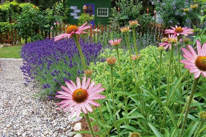 coloridas plantas sistemas efectos finas