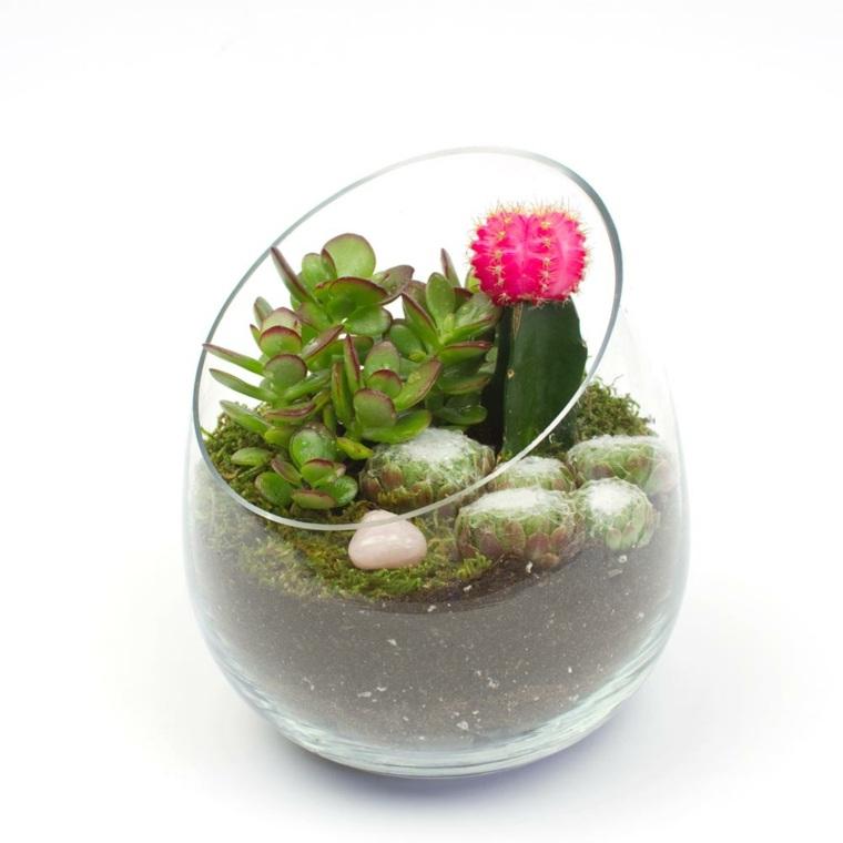 cuenco cristal plantas cactus