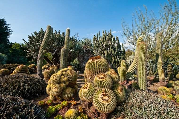 cultivar distintas especies plantas cactus