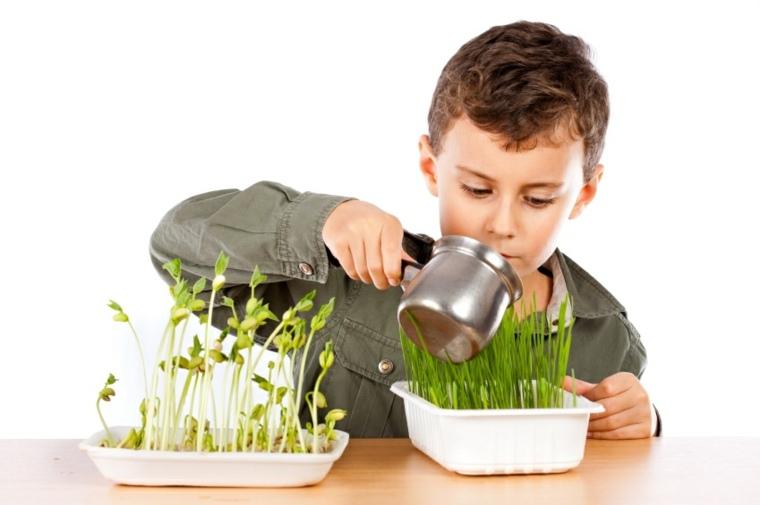 cultivar plantas niños agua