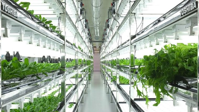 cultivos hidroponicos verduras y especias