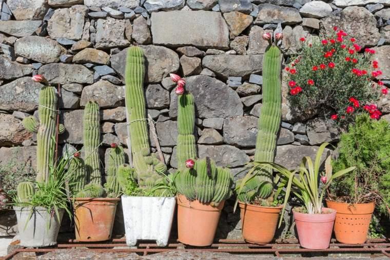 decorar con macetas cactus
