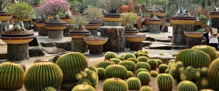 decoracion óriginal jardines cactus