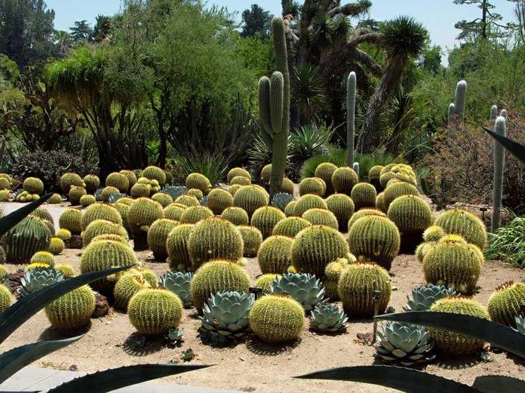 decoracion jardines muchos cactus