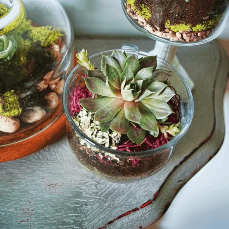 decorar primavera terrarios plantas
