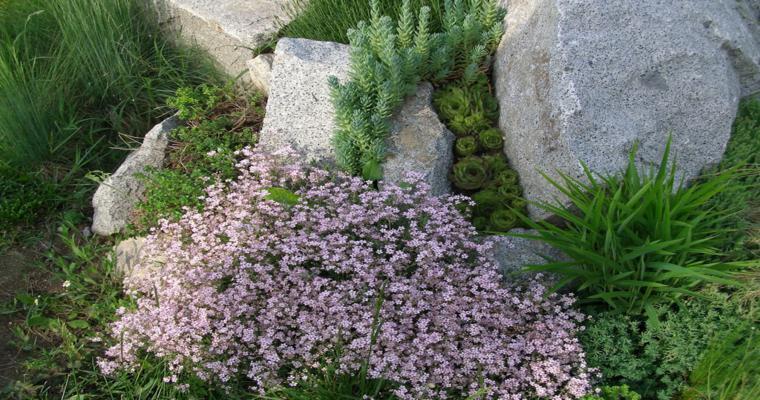 alpineum jardín moderno plantas