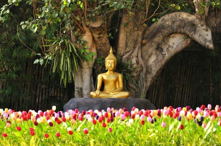 decoracion de jardines dieno asiatico buda oro ideas