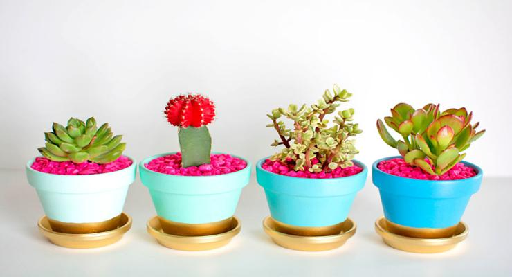 plantas de interior - ideas diy prácticas y decorativas -