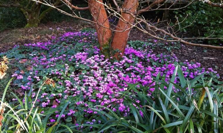 decorate gardens many flowers