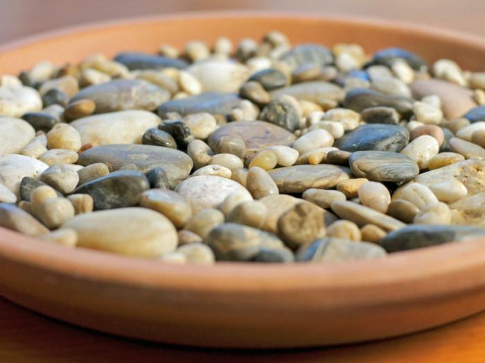 detalle plantas drenajes ideas rocas