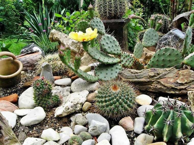 estupendo jardin muchos cactus