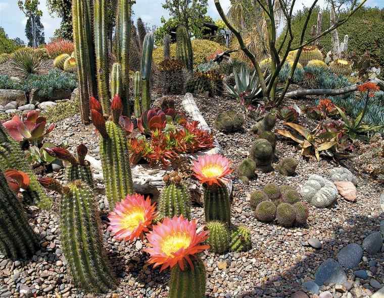 estupendo jardin flores cactus