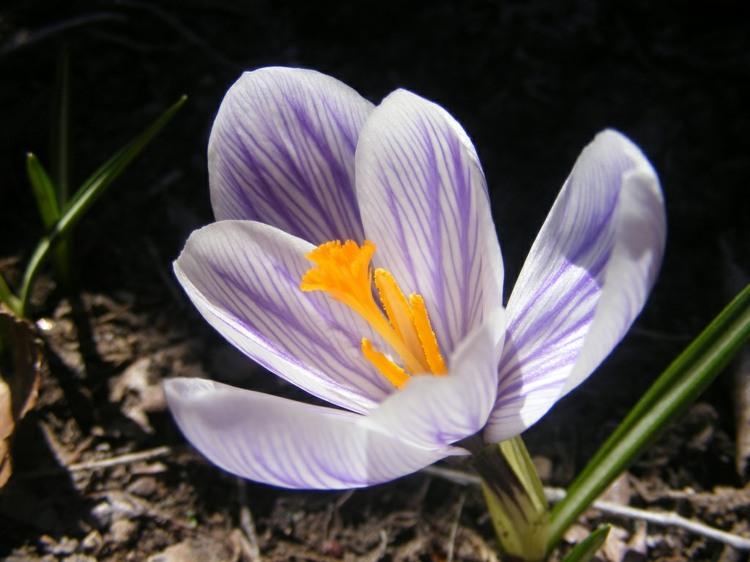 flor silvestre vista cerca
