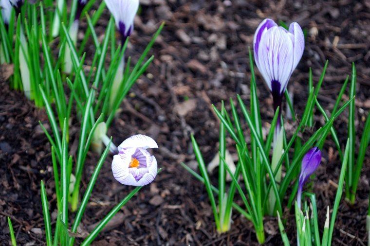 flores de mes de marzo