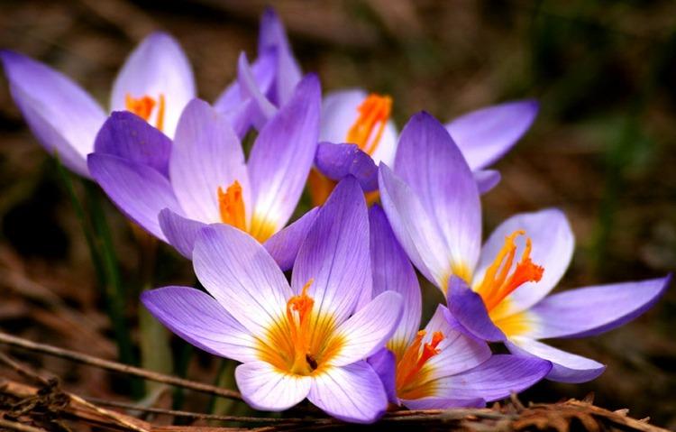 flores bonitas vistas cerca violeta