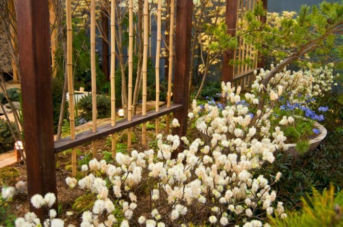 frsca propuesta bambu ideas propuestas