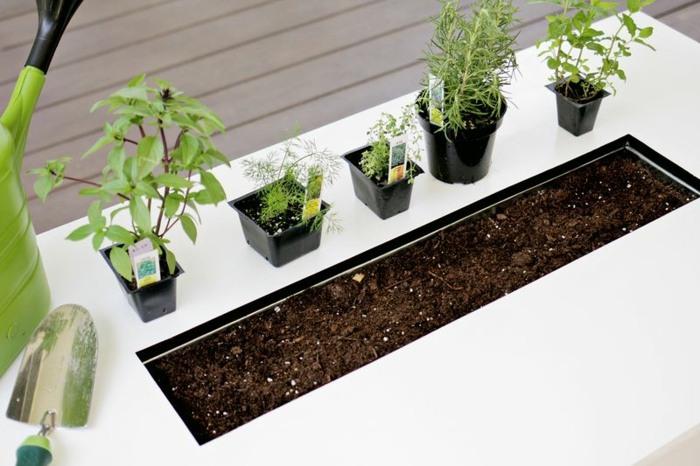 hierbas aromaticas blanco mantillo suelos